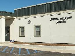 lawton animal hospital city of lawton releases status on animal welfare division kswo