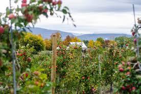 Best Pumpkin Apple Picking Long Island Ny by Best Apple Orchards In New England New England Today