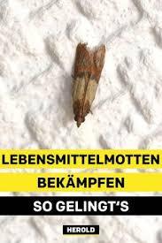 14 insekten ideen insekten lebensmittelmotten