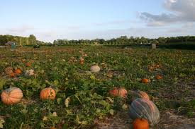 Pumpkin Picking Farms In Maryland by Home