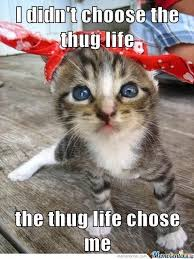 thug cat cat thug by memebuildermaster meme center