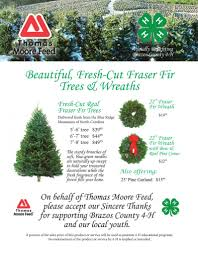 Fraser Fir Christmas Trees North Carolina by Thomas Moore Feed Christmas Tree Fundraiser Brazos 4 H Archery Club