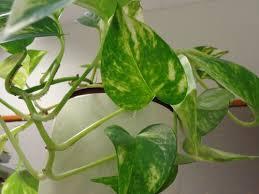 luftreinigende pflanzen fürs schlafzimmer lagerhaus