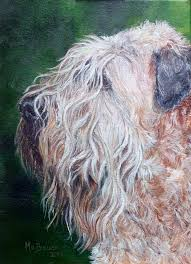 Do Irish Wheaten Terriers Shed by Web Site By Monika Brauer Www Wheaten Ca