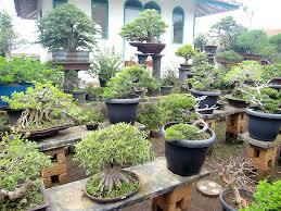 pot bonsai grande taille bonsai arrosage savoir comment bien arroser bonsai entretien