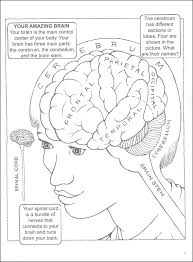 My First Book About The Brain Coloring
