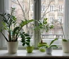 plante chambre plante verte dans une chambre idées décoration intérieure