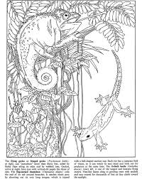 Welcome To Dover Publications Rain Forest Animals Fun Kit