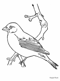 Limited Pictures Of Birds To Colour Bird Coloring Pages Kids