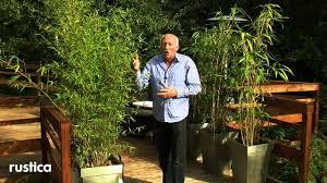 entretien des bambous en pot entretenir et soigner un bambou en pot