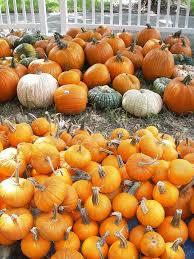 Pumpkin Patch Near Pensacola Fl by 61 Best Kissimmee Festivals U0026 Events Images On Pinterest Drinks