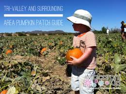 Livermore Pumpkin Patch by Local Pumpkin Patches In The Tri Valley And Surrounding Areas