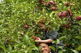 Apple Pumpkin Picking Syracuse Ny by Best Apple Picking In Upstate Ny 21 Orchards To Visit During Fall