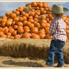 Valas Pumpkin Patch by Visit U0027the Good Life U0027 U0026 Experience U0027great Shopping U0027 At Nex Outlets