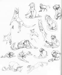 Cat Anatomy Coloring Study Pencil And In Color