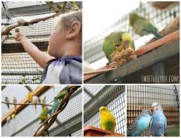 Roger Williams Pumpkin Festival 2017 by Roger Williams Park Zoo Birds From Down Under Sweet Lil You