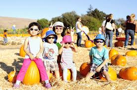 Shawns Pumpkin Patch Los Angeles Ca by The Best Pumpkin Patches In And Around Los Angeles 2017 Best