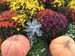 Apple Pumpkin Picking Syracuse Ny by Neilcaseysfarmmarket Com Home