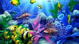 Sea Seabed Colorful Tropical Fish Coral Wallpaper Hd For Desktop
