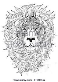 Attractive Fluffy Lion Head