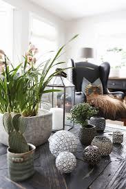 pflanzen und dekokugeln auf dem tisch im bild kaufen