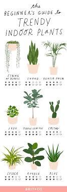 hängende blume hängepflanzen zimmerpflanze pflanze in