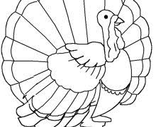 Free Turkey Coloring Pages For Preschoolers 19 Printable