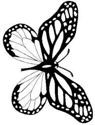 Good Monarch Butterfly Coloring Pages 91 For Free Book With