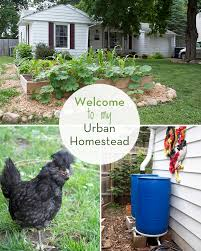 A Tour Of My Urban Homestead - My Humble Kitchen Via Natureholic3 Backyard Homestead Looking Urbangarden The Zapata Times 12172016 By Issuu Natural Swimming Pools Ideas To Create A Cooling Summer Retreat Planning Your Garden Farming Cnection Little In Boise Our Layout Overview Bluebirds Backyard Chickens Rental Brown Family 25 Beautiful Layout Ideas On Pinterest Carport Covers 40 Projects For Building Fox Chapel Publishing