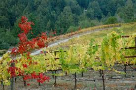 Best Christmas Tree Farms Santa Cruz by Our Story U2013 Silvertip Vineyards