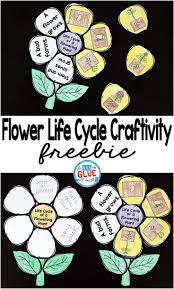 Life Cycle Of A Pumpkin Seed Worksheet by The 25 Best Plant Life Cycles Ideas On Pinterest Teaching