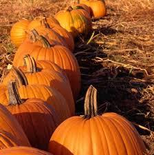 Pittsburgh Area Pumpkin Patches by 2017 Pumpkin Patch Fundraiser Unitarian Universalist Church Of