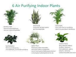 Best Plants For fice fice Plant Light A Breath Fresh Air