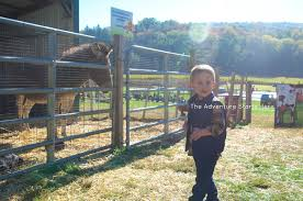 Pumpkin Patch Columbus 2015 by The Adventure Starts Here Farm Fun With The Family