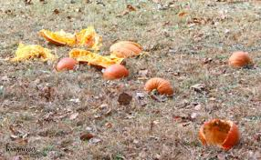 Pumpkin Chunkin Delaware by What Is Pumpkin Chunkin U0026 How To Host Your Own Event Housewives
