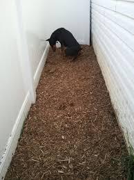 Best Type Of Flooring For Dogs by Best 25 Dog Run Yard Ideas On Pinterest Dog Backyard Dog Potty