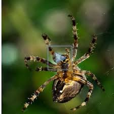patience l araignée tisse sa toile