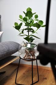 wasserpflanze in gestell wasserpflanzen hydrokultur