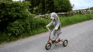 Dog Bike GIF