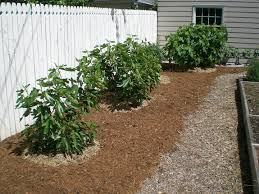 09 Acres: Mulch Ado About Nothing Backyards Chic Backyard Mulch Patio Rehabitual Homes Bliss 114 Fniture Capvating Landscaping Ideas For Front Yard And Aint No Party Like A Free Mind Your Dirt Pictures Simple Design Decors Switching From To Ground Cover All About The House Time Lapse Bring Out Mulch In Backyard Youtube Landscape Using Country Home Wood Chips Angies List Triyaecom Dogs Various Design Inspiration For New Jbeedesigns Outdoor Best Weed Barrier Borders And Under Playset Playground