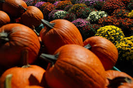 Pumpkin Patch Pittsburgh North Hills by Fall Festivals Include Corn Mazes Pumpkin Carving Games Food