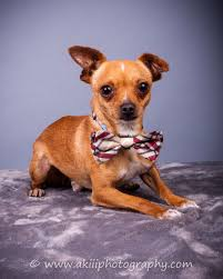 100 Where Is Chihuahua Located Rescue Transport