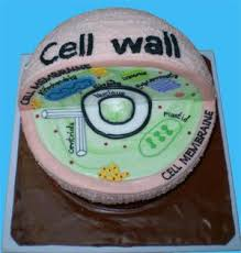 plant cell cake project Google Search plant cell cake project Pinterest