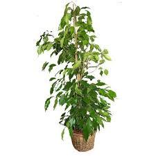 plantes vertes d interieur le bienfait des plantes vertes