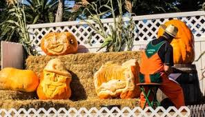 Half Moon Bay Glass Pumpkin Patch by A Letter To The Coastside Thanks For A Spooktacular October We