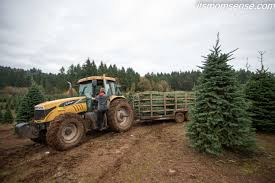 Flocking Machine For Christmas Trees by December Farming In Focus Christmas Trees It U0027s Momsense