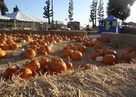 Best Pumpkin Patch In San Bernardino County by Montclair Plaza Features Country Bumpkins Pumpkin Patch U2013 Daily