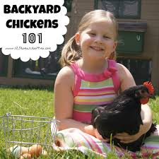 Backyard Chickens 101: Our Disappointing Hatching Backyard Chickens 101 The Moms Guide To San Diego Amazoncom Complete Beginners Lauren Diamant Are Hard Workers In Our Bnyard Every Animal We Raise Renew Pinterest Flock Has A Complex Social Hierarchy With Singular Leader Raising For Dummies Modern Farmer Sister Chicks Club House Backyard Home Cluck Central Cedar Falls Iowa Public Radio 2015 Fact Sheet Chicken Egg 141 Best Images On