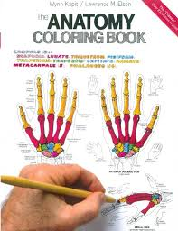 Saunders Anatomy Coloring Book Veterinary Review Body