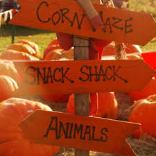 Pumpkin Picking In Chester Nj by 8 Best Top 8 Pumpkin Picking Farms For Families In New Jersey